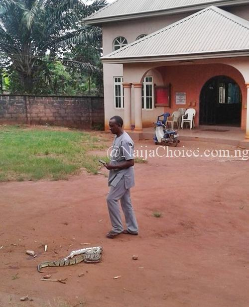 How Hot Prayers Allegedly Caused Fight Between Two Big Snakes In Anambra – Pastor Shares Photos