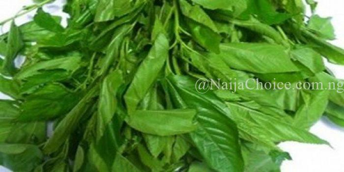 Eating 'Ewedu' Can Help Prevent Cancer And Coronary Diseases – Nutritionist